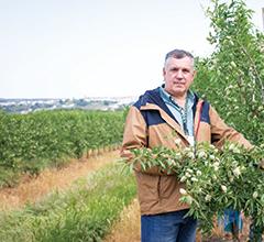 José Maria Falcão num amendoal super-intensivo (1333 árvores/hectare) plantado em Setembro de 2014